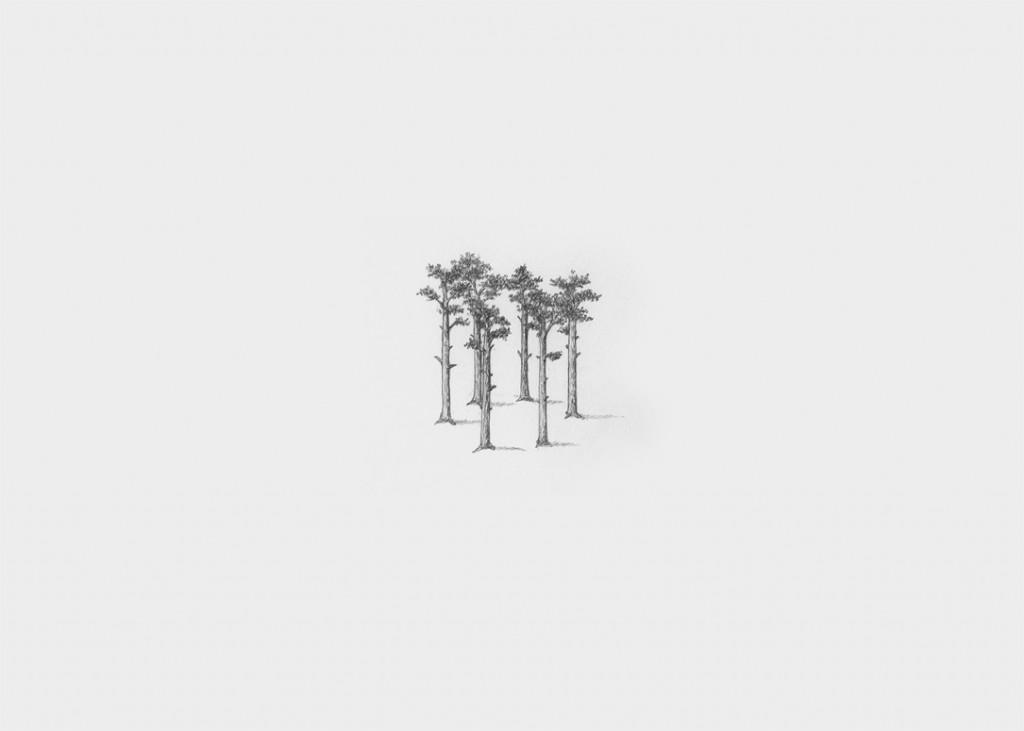 pine setup #1